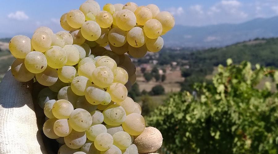 Trebbiano Spoletino - Biodiversità